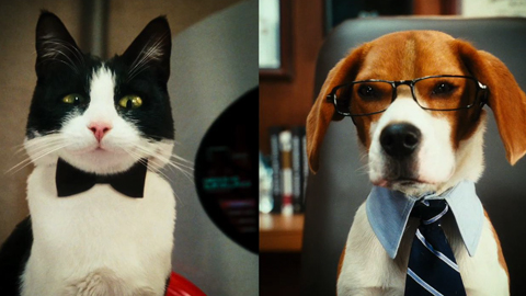 44692000001_57112404001_CatsAndDogs-2-Trailer-1-720